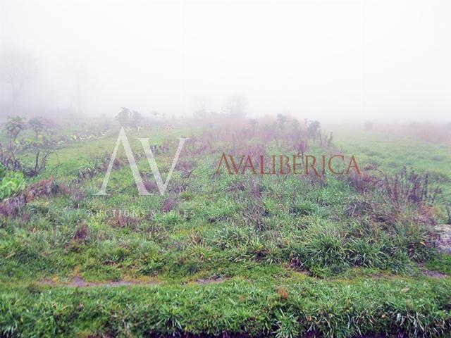 Fotografia de capa da venda Maria Adelina Pereira de Jesus.